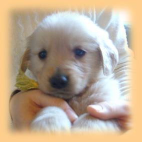 子犬の画像 p1_6